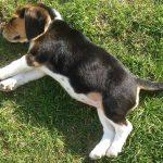 rc pro hypnothérapie animale